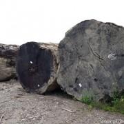 Log Merbau Diameter Extra Besar
