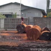 Log Merbau Extra Besar Dibelah Dulu Pakai Chainsaw