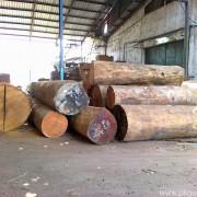 Tumpukan Log Kayu Merbau