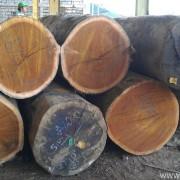 Tumpukan Log Merbau utuk dibelah